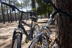 Two bicycles by tree in forest, close-up Royalty Free Stock Photos