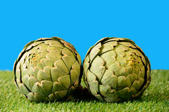 Two big artichokes Royalty Free Stock Photography