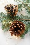 Two big brown cones on the fir branch, around the garland stock image