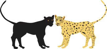Two big cats. Leopard and pantera  images Stock Photo