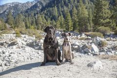 Two big dogs on hike stock images