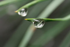Two big droplet of dew Royalty Free Stock Photography