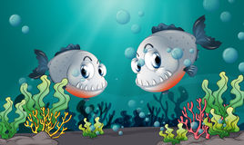 Two big grey fishes under the sea Royalty Free Stock Photos