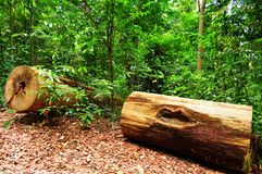 Two big logs of wood in the forest Royalty Free Stock Photos