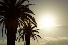 Two big palm trees at sunset with sun between their leaves. Two big palm trees at sunset with sun between leaves Stock Photos