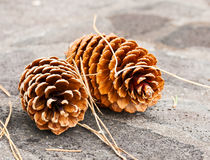 Two big pine cones Royalty Free Stock Images