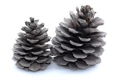 Two big pine cones on the white background. Two pine cones on the white background Royalty Free Stock Photo