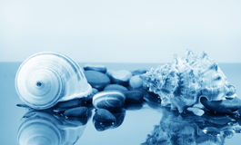Two big sea shells and pebbles Royalty Free Stock Image