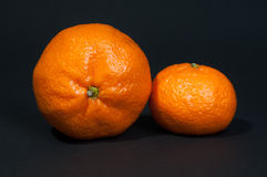 Two big and small tangerine on black background. Two large and little tangerine on black background Royalty Free Stock Photo