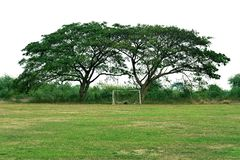 Two big tree and football field Royalty Free Stock Images