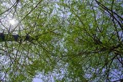 Two big tree up to the sunshine sky Stock Photos