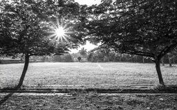 Two big trees in left and right, Royalty Free Stock Images