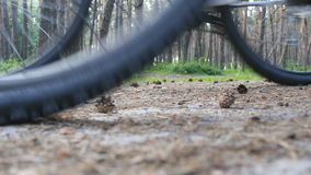 Two bikers start riding bikes through forest path. Friends cycling through wood. Low Angle View stock footage