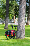 Two Bikes against Tree Royalty Free Stock Images