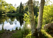 Two birch tree trunks in front of a beautiful pond with reflections in the water and green trees and bushes. Sun royalty free stock images