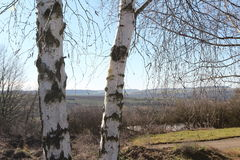 Two birch trees Royalty Free Stock Photo