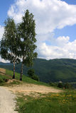 The two birch trees in the mountains Stock Image