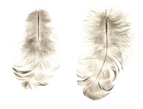 Two bird feather isolated on white background. Stock Image