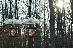 Two Bird Feeders Hanging with Squirrel Shields royalty free stock photography