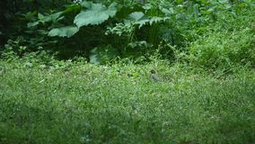 Two bird in the grass stock video footage