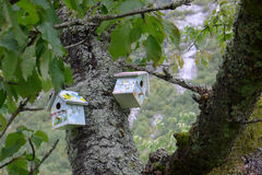 Two birdhouses. Hanging in tree Royalty Free Stock Images
