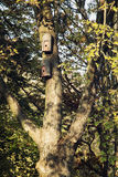 Two birdhouses hanging on the tree Royalty Free Stock Images