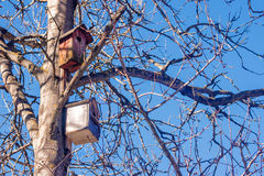 Two birdhouses on a tree in the spring Stock Photo