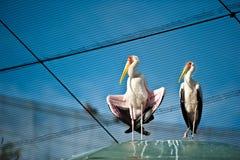 Two birds. In a bird park Stock Photo