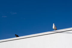 Two birds. Pair of birds sitting on a rooftop Stock Photo
