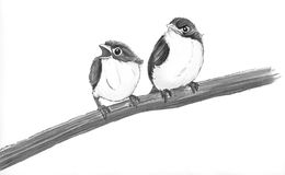 Two birds. Birds illustration pencil Stock Photo