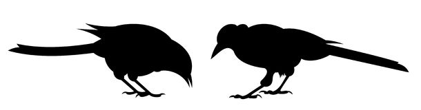 Two birds. Side view. Illustration Stock Images