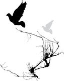 Two Birds. Take wing from the branches of a tree Stock Photos