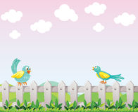 Two birds above the fence Royalty Free Stock Photo