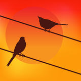 Two birds on the background of the sunset. Royalty Free Stock Photography