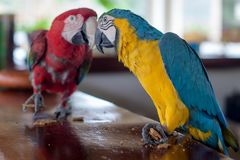 Two birds on a bar. Two birds looking at each other on a bar at Monkey Jungle royalty free stock photo