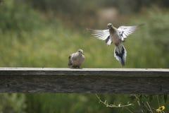 Two birds Royalty Free Stock Photos