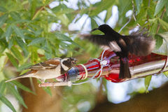 Two birds at a bottle feeder Stock Photography