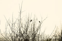 Two birds on a branch Royalty Free Stock Photography