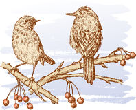 Two birds on the branches Royalty Free Stock Photo