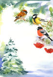 Two birds and bullfinch on the snowy branch. With berries of Viburnum and Christmas tree in the snow on background Royalty Free Stock Photo