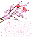 Two birds with cherry blossoms. BirdS on branch with pink cherry blossoms-space for text royalty free illustration