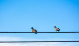 Two birds couple on wire Stock Photography