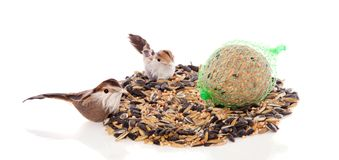 Two birds eating winter birdseeds Royalty Free Stock Images
