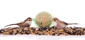 Two birds eating winter seeds Royalty Free Stock Photo