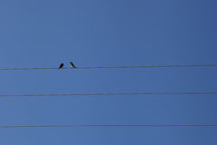 Two birds on an electric wire Royalty Free Stock Image