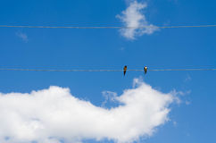 Two birds on electric wires Stock Images