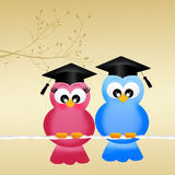 Two birds graduates Royalty Free Stock Photo