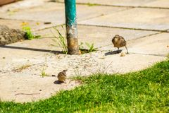 Two birds in the home garden, close up shot stock image