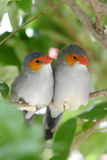 Two birds huddled together Royalty Free Stock Photos