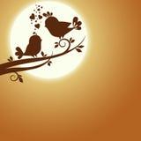 Two birds in love Stock Image